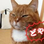 【どや顔☆ペット選手権】のネコちゃん&ワンちゃんがめちゃかわいい。